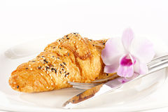Delicious croissant on white plate Royalty Free Stock Image