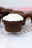 Delicious cupcake. Chocolate cupcake with vanilla frosting Royalty Free Stock Photo