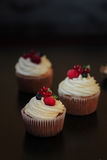 Delicious cupcakes with berries Stock Image