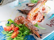 Dish of grilled prawns, with salad and tomatoes royalty free stock image