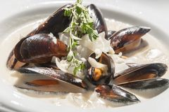 Delicious fresh Steamed Mussels stock photography