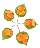 Delicious dried apricots on green leaves Stock Images