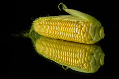 A delicious ear of corn Royalty Free Stock Photography