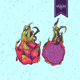 Delicious exotic hand drawn vector fruits Stock Photography