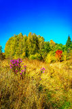 Delicious, fabulous fall over meadow. Stock Photos