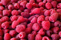 Delicious first class fresh raspberries background. Texture Royalty Free Stock Photo