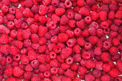 Delicious first class fresh raspberries. Background texture Royalty Free Stock Image