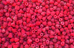 Delicious first class fresh raspberries background texture. Close up Royalty Free Stock Photography