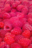 Delicious first class fresh raspberries background texture. Delicious first class fresh raspberries hi quality background texture Royalty Free Stock Photography
