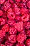 Delicious first class fresh raspberries close up texture - background Stock Images