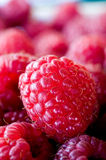 Delicious first class fresh raspberries closeup. Delicious first class fresh raspberries texture Stock Photography