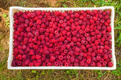 Delicious first class fresh raspberries hi quality. Delicious first class fresh raspberries background Royalty Free Stock Photography