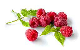 Delicious first class fresh raspberries. Isolated on white Stock Images
