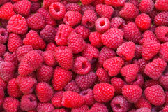 Delicious first class fresh raspberries Stock Photography