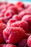 Delicious first class fresh raspberries - texture and background. Close up Royalty Free Stock Photos