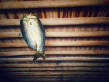 Delicious fish. The people here like  hang the fish on the ceiling to dry Royalty Free Stock Images