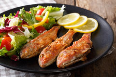 Delicious fish red mullet with fresh mix vegetable salad close-u Stock Photos