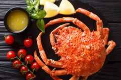 Delicious food: boiled spider crab with tomato, lemon and melted. Butter close-up on a black board. horizontal top view from above royalty free stock image