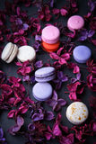 Delicious French dessert macarons Royalty Free Stock Photos