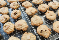 Delicious Fresh Almond  and currant Cookies Royalty Free Stock Photos