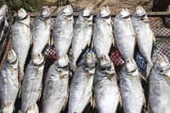Delicious Fresh And Healthy Fish, Cuisine Of Hongkong Royalty Free Stock Images