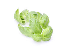 Delicious fresh basil Stock Photos