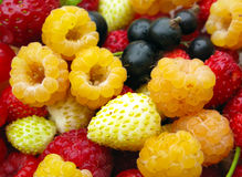 Delicious Fresh Berry Mix. Assorted fresh berries: raspberries, strawberies, currants Stock Photo