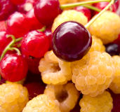 Delicious Fresh Berry Mix. A macro shot of delicious fresh cherries, yellow raspberries, and red currants Stock Image