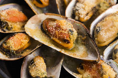 Delicious Fresh Clams Stock Photography
