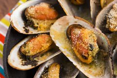 Delicious Fresh Clams Royalty Free Stock Photography