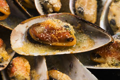 Delicious Fresh Clams Royalty Free Stock Image