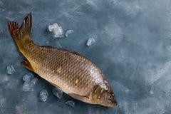Delicious fresh fish (carp) Stock Image