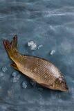 Delicious fresh fish (carp) Royalty Free Stock Photos