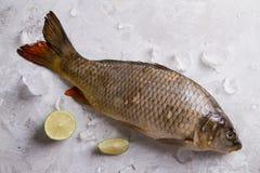 Delicious fresh fish (carp) Stock Photography