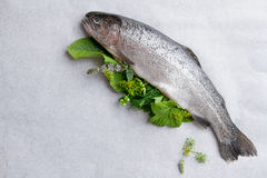 Delicious fresh fish trout. With herbs on paper background for healthy food, diet or cooking concept, selective focus stock image