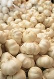 Delicious and fresh garlic Royalty Free Stock Photography
