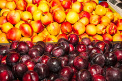 Delicious fresh juicy nectarines and plums Stock Photo