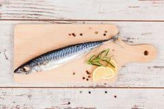 Delicious fresh mackerel fish. Stock Image