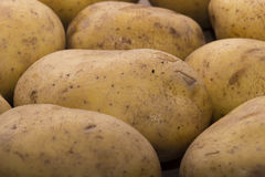 Delicious fresh potato from the German farm #2 Royalty Free Stock Images
