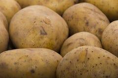 Delicious fresh potato from the German farm Stock Image