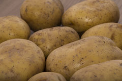 Delicious fresh potato from the German farm #6 Stock Images