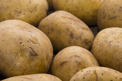 Delicious fresh potato from the German farm #10 Stock Image