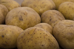 Delicious fresh potato from the German farm #7 Royalty Free Stock Images