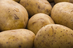 Delicious fresh potato from the German farm #8 Royalty Free Stock Images
