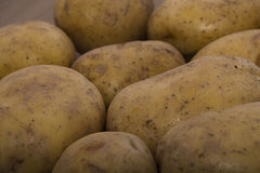 Delicious fresh potato from the German farm #5 Stock Photos