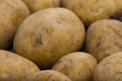 Delicious fresh potato from the German farm #9 Royalty Free Stock Photo