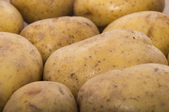 Delicious fresh potato from the German farm #3 Royalty Free Stock Image