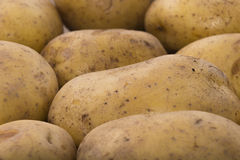 Delicious fresh potato from the German farm #4 Stock Photos