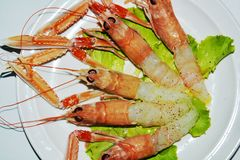 Delicious fresh prawns and salad on a white plate background Stock Photography