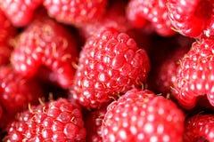 Delicious fresh raspberries background closeup. Delicious fresh raspberries background close up Royalty Free Stock Photo